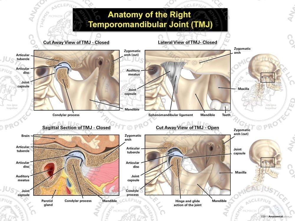 Anatomy Of The Right Temporomandibular Joint Tmj