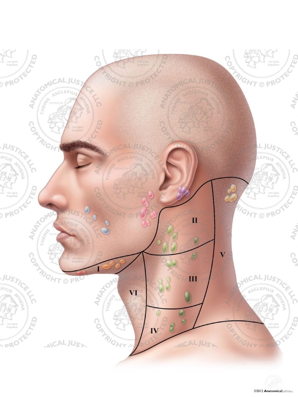 Diagram Of Lymph Nodes In Neck